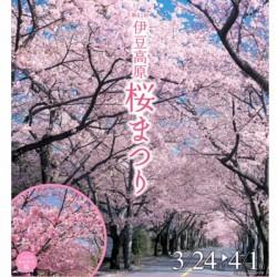 【 伊豆高原🌸桜並木🌸開花 】